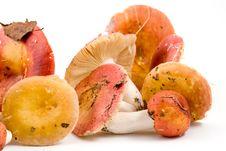 Free Mushrooms Royalty Free Stock Image - 15028066