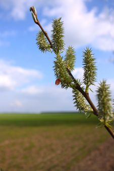Free A Branch With New Spring Shoots And Stock Photography - 15029212