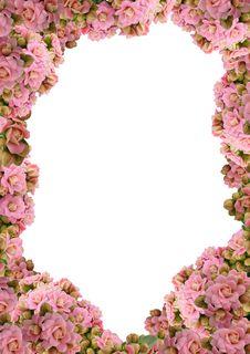 Free Kalanchoe - Floral Frame Stock Images - 15029574