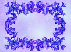 Floral Frame - Orchids Royalty Free Stock Photo