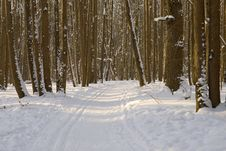 Winter Forest With Ski Track Royalty Free Stock Photography
