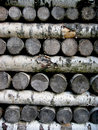 Free A Pile Of Birch Logs Royalty Free Stock Image - 15032316
