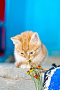 Free Red Kitten Stock Photo - 15033660