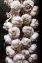 Free Garlic Royalty Free Stock Image - 15037306