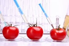 Free Experimenting With Tomatoes Royalty Free Stock Images - 15030039
