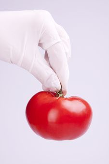 Free Scientist Holding Tomato Royalty Free Stock Images - 15030069