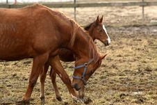 Free Mare With Her Foal Stock Photo - 15030120