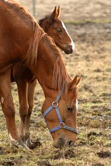 Free Mare With Her Foal Stock Images - 15030124
