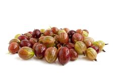 Free Gooseberries Royalty Free Stock Images - 15031029