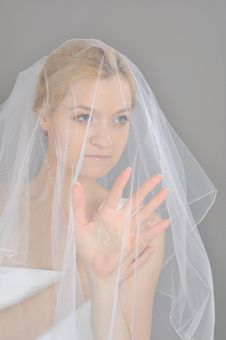Free Young Beautiful Bride Covered In Veil Royalty Free Stock Photo - 15031395