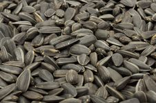 Free Sunflower Seeds Stock Image - 15032111