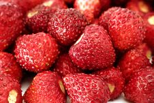 Free Fresh Wild Strawberries Stock Photography - 15032132