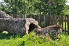 Old Big Tree Trunk Stock Photo