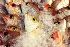 Free Coral Fishes Royalty Free Stock Photo - 15033005