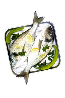 Free Fishes Stock Photo - 15033050