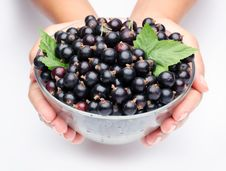 Free Crockery With Black Currant. Royalty Free Stock Photography - 15033357