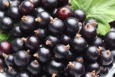 Free Crockery With Black Currant. Royalty Free Stock Image - 15033486