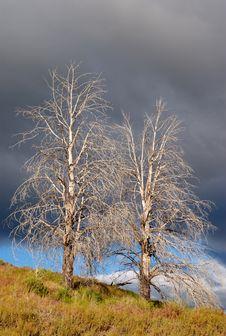 Free Desert Trees (Portrait) Stock Photos - 15034653