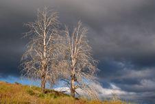 Free Desert Trees (Landscape) Stock Photography - 15034682