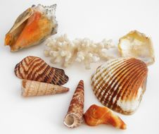 Free Shell Collection Royalty Free Stock Photo - 15035005