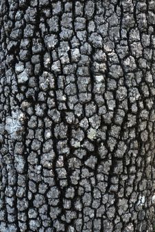 Tree Skin, Close Up Of Tree Bark Stock Images