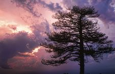 Free Pine And Sunset Stock Image - 15036321