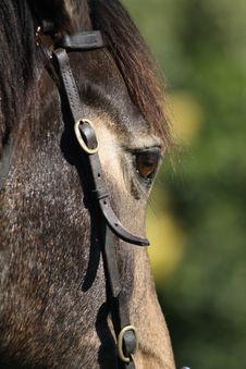 Free Horse Stock Photos - 15036693