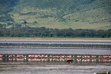 Africa,Tanzania, Ngorongoro Crater Royalty Free Stock Images