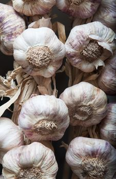 Free Garlic Royalty Free Stock Photos - 15037288
