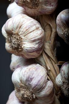 Free Garlic Royalty Free Stock Image - 15037316