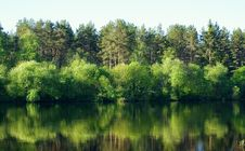 Free Tree`s And Water Stock Photo - 15037460