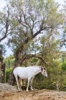 Free Horse Stock Photo - 15038760