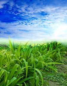Free Sky And Grass Royalty Free Stock Photography - 15039457