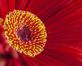 Free Red Flower Stock Image - 15046401