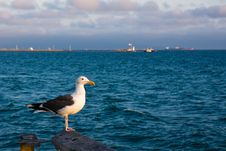 Free Seagull At Sunset Stock Image - 15040901