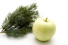 Free Fir Branches With Apple Royalty Free Stock Photo - 15041675