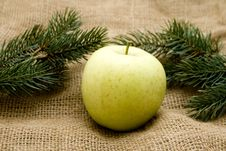 Free Fir Branches With Apple Stock Image - 15041821