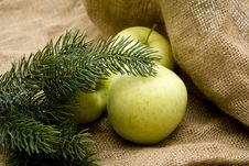 Free Fir Branches With Apples Stock Image - 15041831