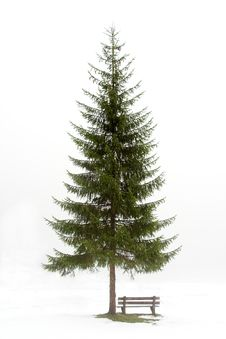 Free Christmas Tree Stock Image - 15044491