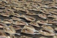 Free Dried Fish Royalty Free Stock Images - 15045109