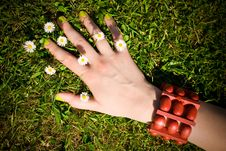 Free Female Hand On The Grass, Small Daisy Flowers Royalty Free Stock Photo - 15045215