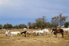Free Horses Stock Photography - 15046102