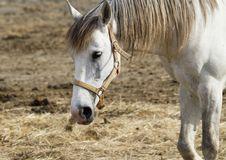 Free Horse Stock Photos - 15046423