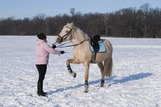 Free Training Horse In Winter Stock Photo - 15046620