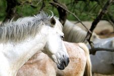 Free Horses Stock Images - 15046694