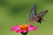 Free Butterfly Stock Photos - 15046903