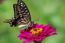 Free Butterfly Stock Photo - 15046930