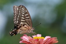 Free Butterfly Stock Photos - 15046943