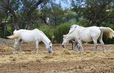 Free Horses Royalty Free Stock Image - 15047036