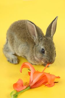 Little Rabbit Stock Image
